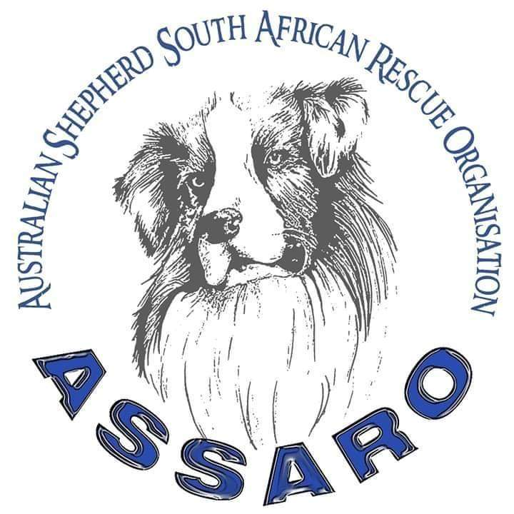 ASSARO AUSTRALIAN SHEPHERD SOUTH AFRICAN RESCUE ORGANISATION